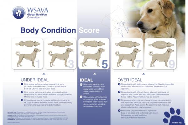 WSAVA richtlijnen voor BCS bij honden