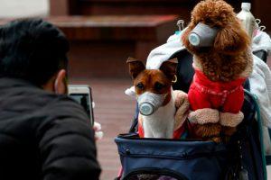 Honden in HongKong