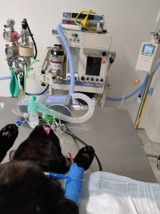 Ieder dier krijgt standaard de beste kwaliteit zorg